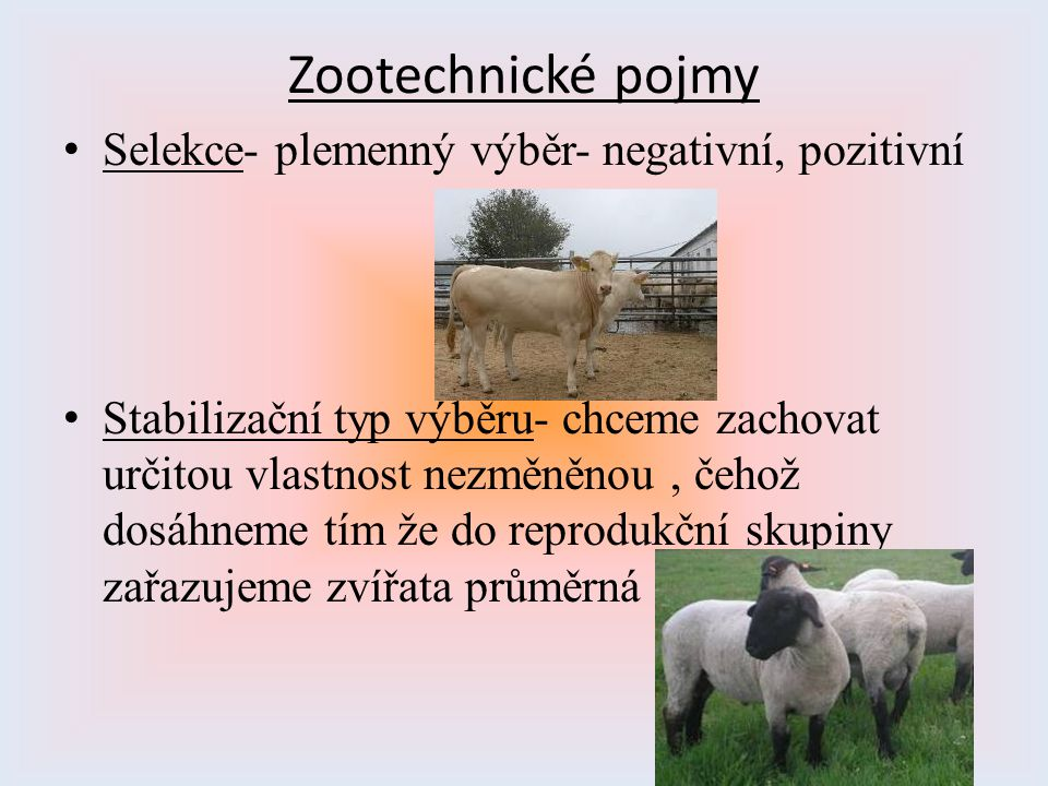 Zootechnické pojmy Selekce- plemenný výběr- negativní, pozitivní