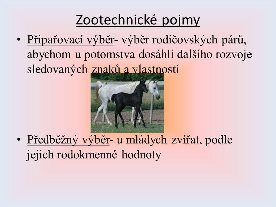 Zootechnické pojmy Připařovací výběr- výběr rodičovských párů, abychom u potomstva dosáhli dalšího rozvoje sledovaných znaků a vlastností.