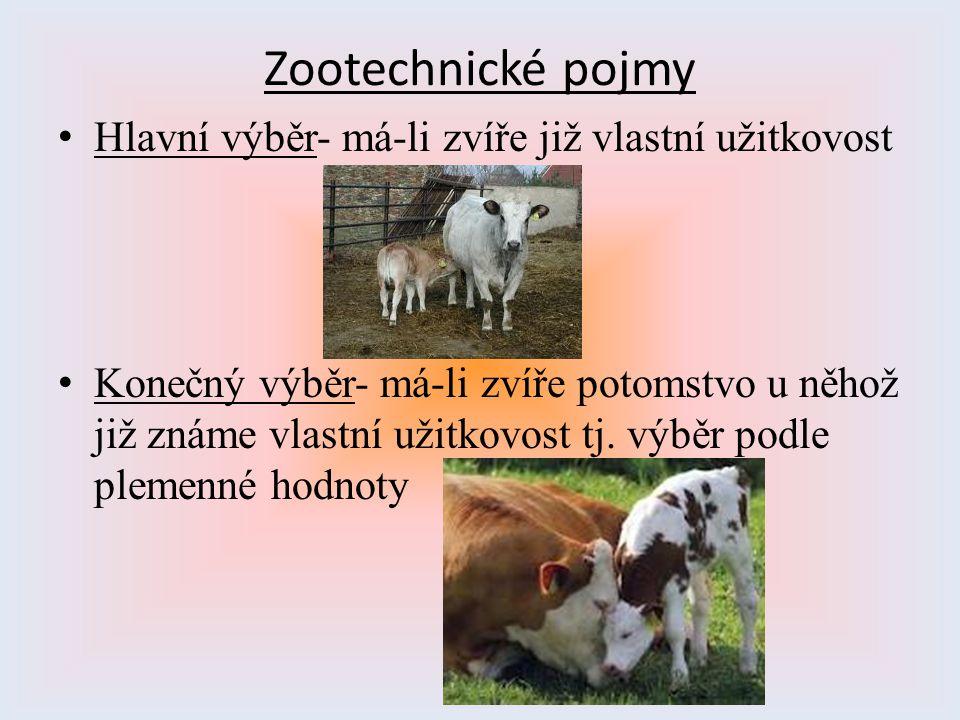 Zootechnické pojmy Hlavní výběr- má-li zvíře již vlastní užitkovost