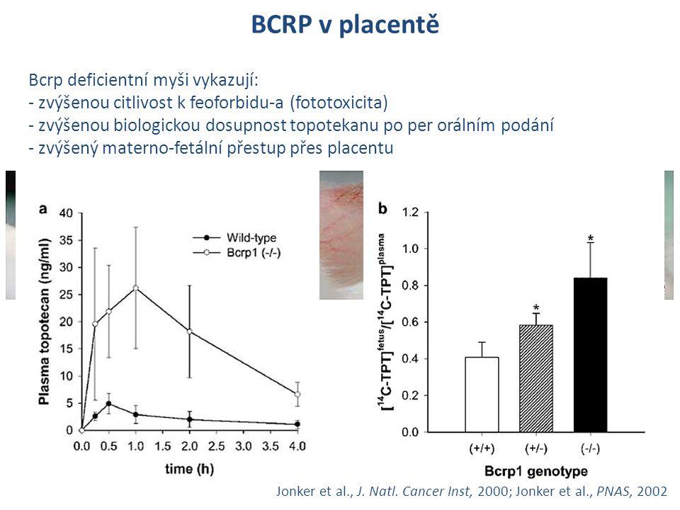 BCRP v placentě Bcrp deficientní myši vykazují: