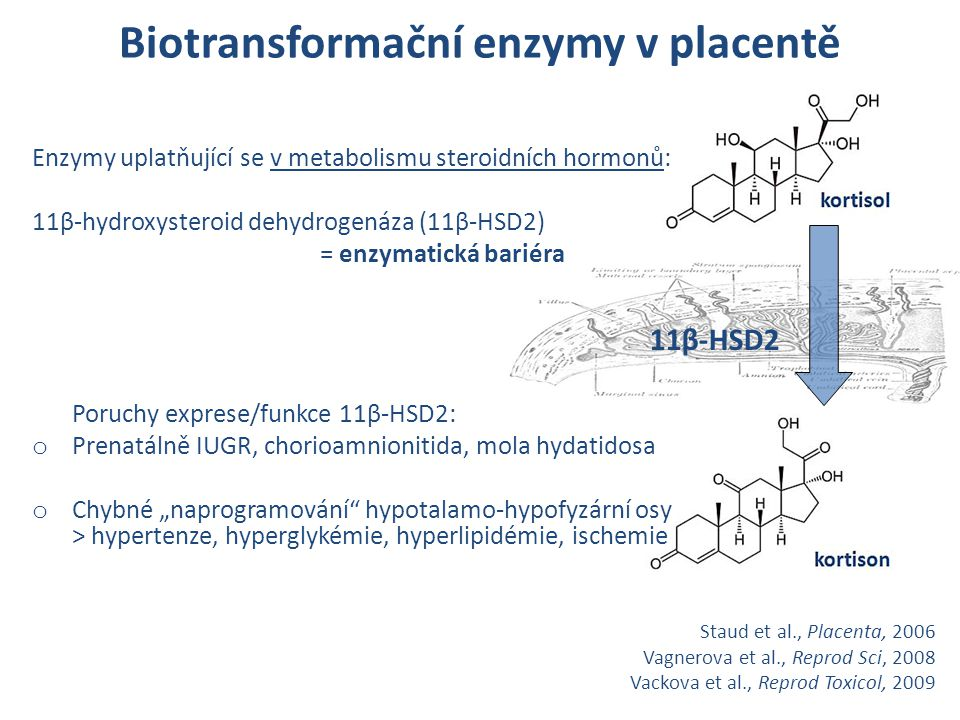 Biotransformační enzymy v placentě