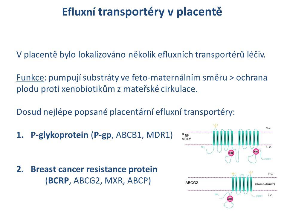 Efluxní transportéry v placentě