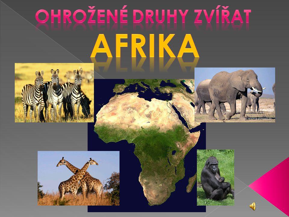 Ohrožené druhy zvířat AfrikA