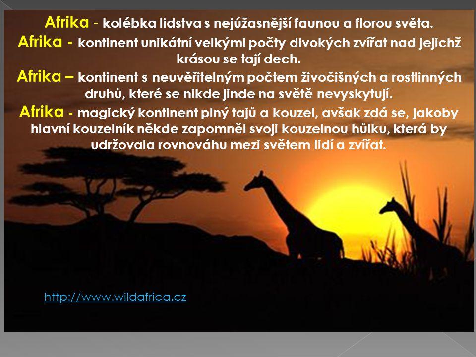 Afrika - kolébka lidstva s nejúžasnější faunou a florou světa.
