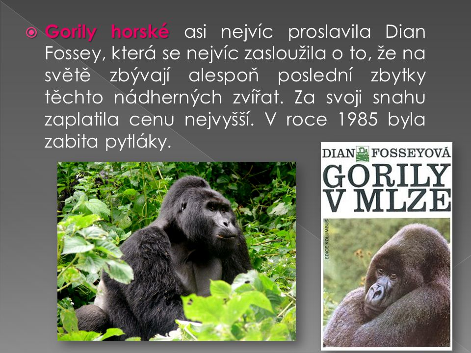 Gorily horské asi nejvíc proslavila Dian Fossey, která se nejvíc zasloužila o to, že na světě zbývají alespoň poslední zbytky těchto nádherných zvířat.