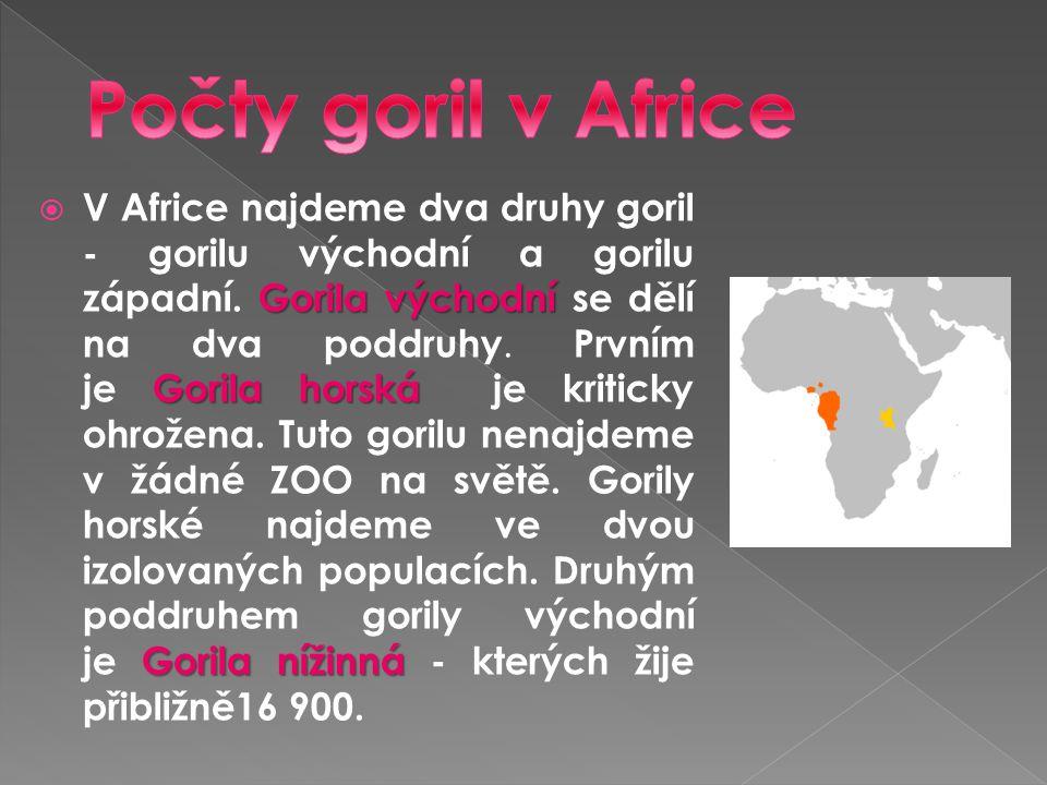 Počty goril v Africe