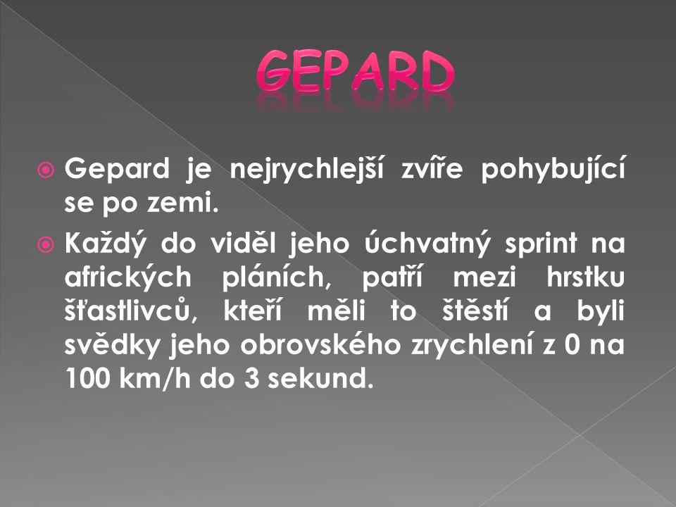 Gepard Gepard je nejrychlejší zvíře pohybující se po zemi.