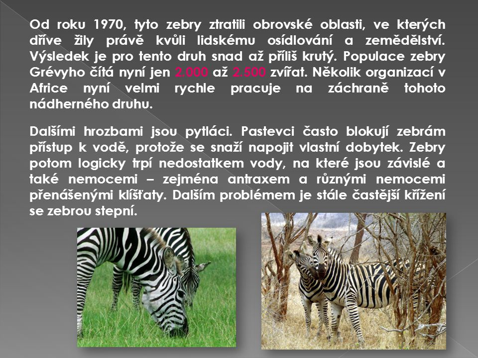 Od roku 1970, tyto zebry ztratili obrovské oblasti, ve kterých dříve žily právě kvůli lidskému osídlování a zemědělství. Výsledek je pro tento druh snad až příliš krutý. Populace zebry Grévyho čítá nyní jen 2.000 až 2.500 zvířat. Několik organizací v Africe nyní velmi rychle pracuje na záchraně tohoto nádherného druhu.