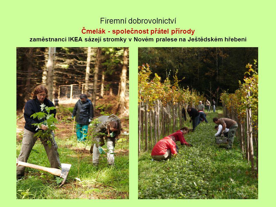 Firemní dobrovolnictví Čmelák - společnost přátel přírody zaměstnanci IKEA sázejí stromky v Novém pralese na Ještědském hřebeni