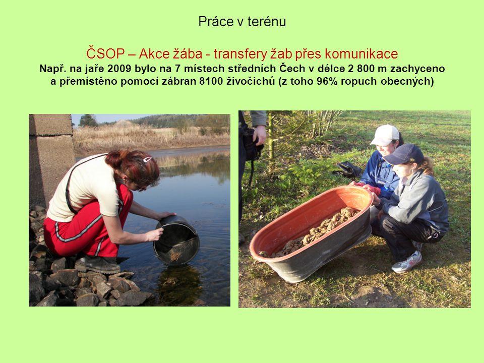 Práce v terénu ČSOP – Akce žába - transfery žab přes komunikace Např