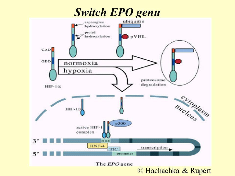 Switch EPO genu © Hachachka & Rupert