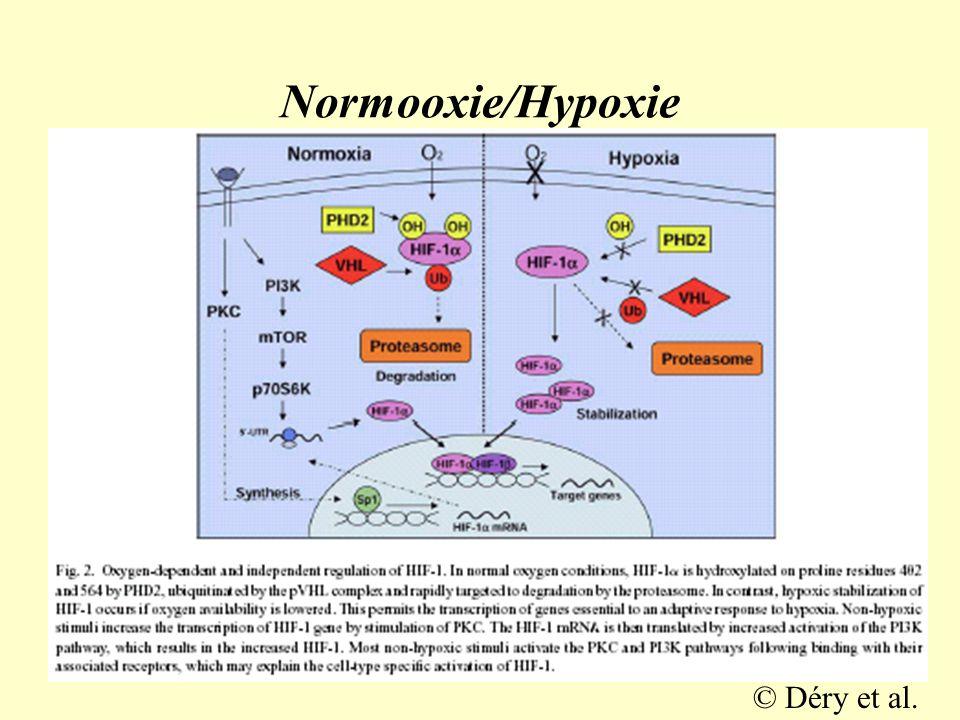 Normooxie/Hypoxie © Déry et al.