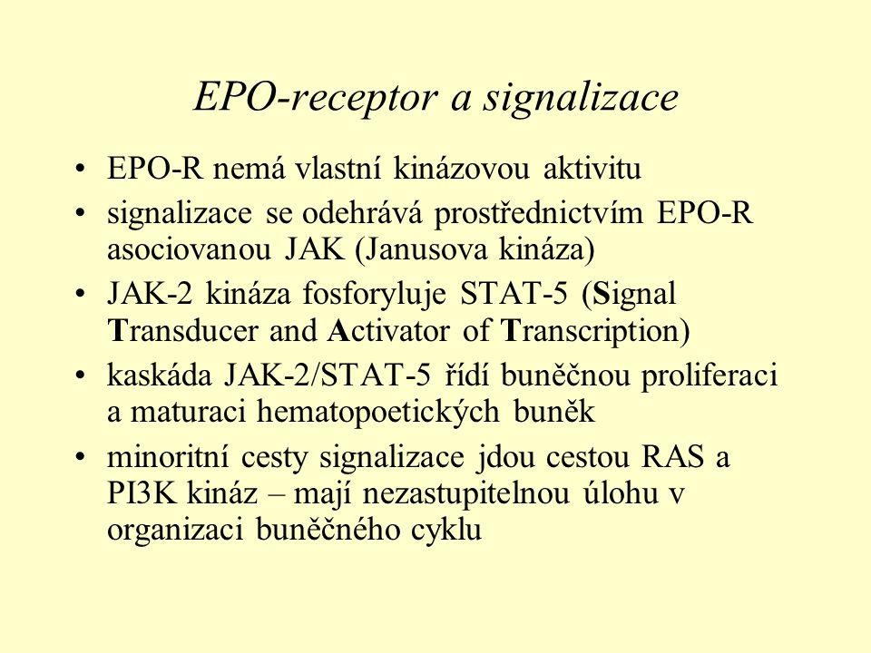 EPO-receptor a signalizace