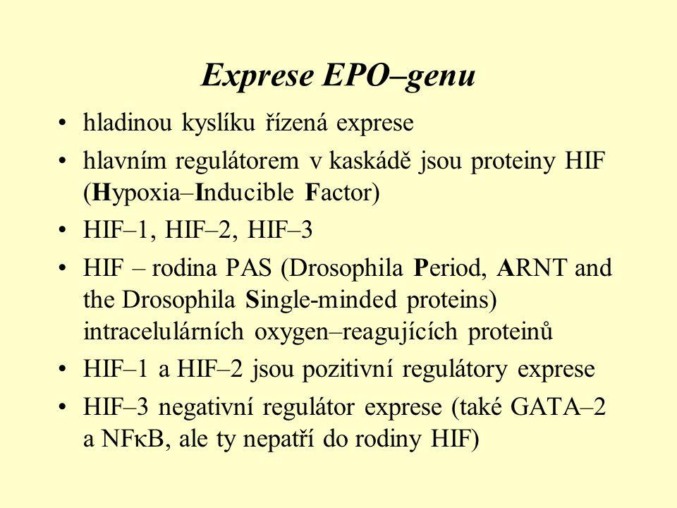 Exprese EPO–genu hladinou kyslíku řízená exprese