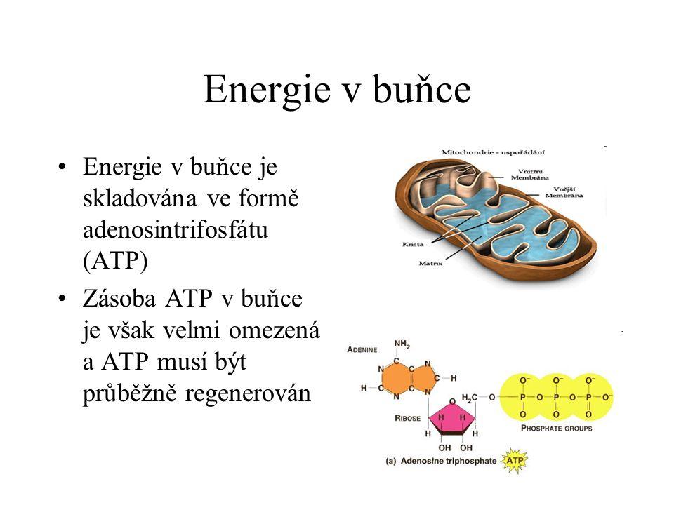 Energie v buňce Energie v buňce je skladována ve formě adenosintrifosfátu (ATP)
