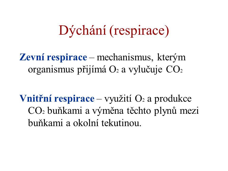 Dýchání (respirace) Zevní respirace – mechanismus, kterým organismus přijímá O2 a vylučuje CO2.