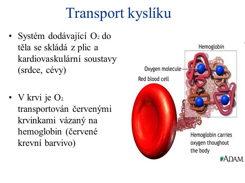 Transport kyslíku Systém dodávající O2 do těla se skládá z plic a kardiovaskulární soustavy (srdce, cévy)