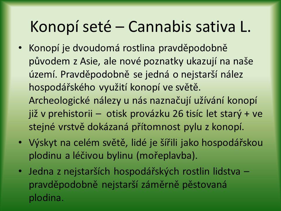 Konopí seté – Cannabis sativa L.