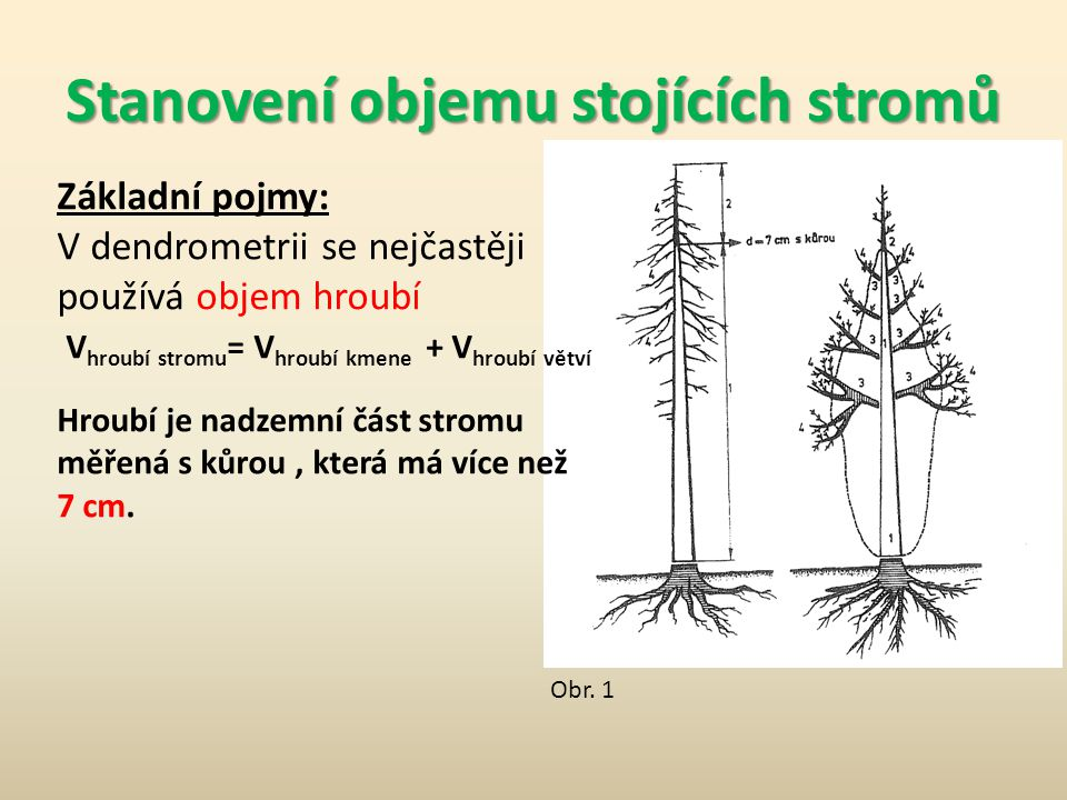Stanovení objemu stojících stromů