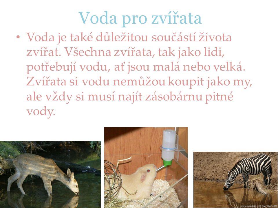 Voda pro zvířata