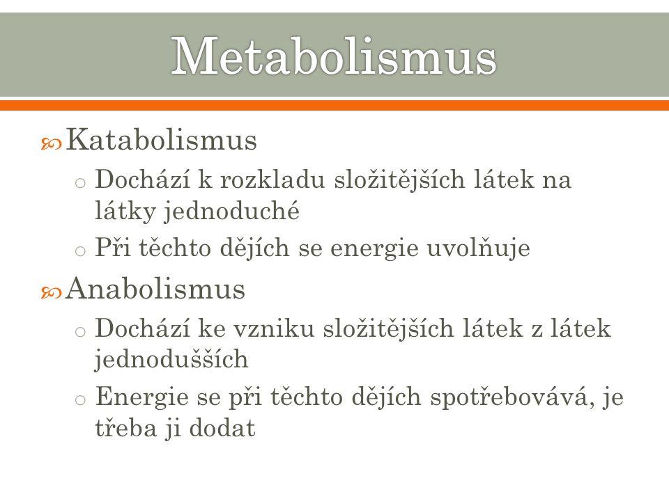 Metabolismus Katabolismus Anabolismus