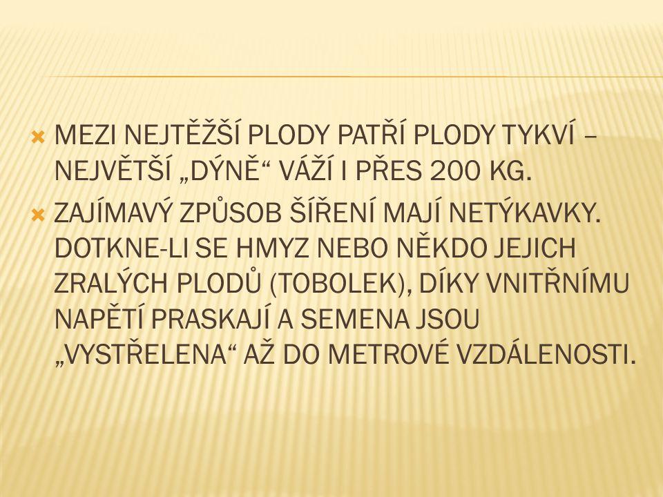 """MEZI NEJTĚŽŠÍ PLODY PATŘÍ PLODY TYKVÍ – NEJVĚTŠÍ """"DÝNĚ VÁŽÍ I PŘES 200 KG."""