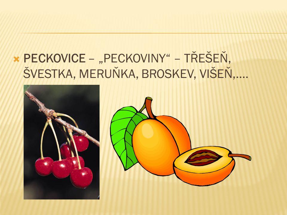 """PECKOVICE – """"PECKOVINY – TŘEŠEŇ, ŠVESTKA, MERUŇKA, BROSKEV, VIŠEŇ,…."""
