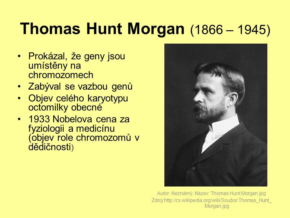 Thomas Hunt Morgan (1866 – 1945) Prokázal, že geny jsou umístěny na chromozomech. Zabýval se vazbou genů.