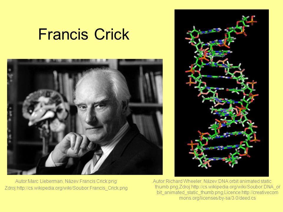 Francis Crick Autor:Marc Lieberman, Název:Francis Crick.png Zdroj:http://cs.wikipedia.org/wiki/Soubor:Francis_Crick.png