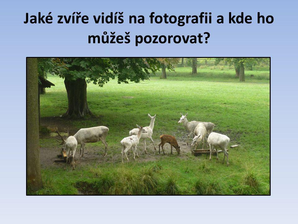 Jaké zvíře vidíš na fotografii a kde ho můžeš pozorovat