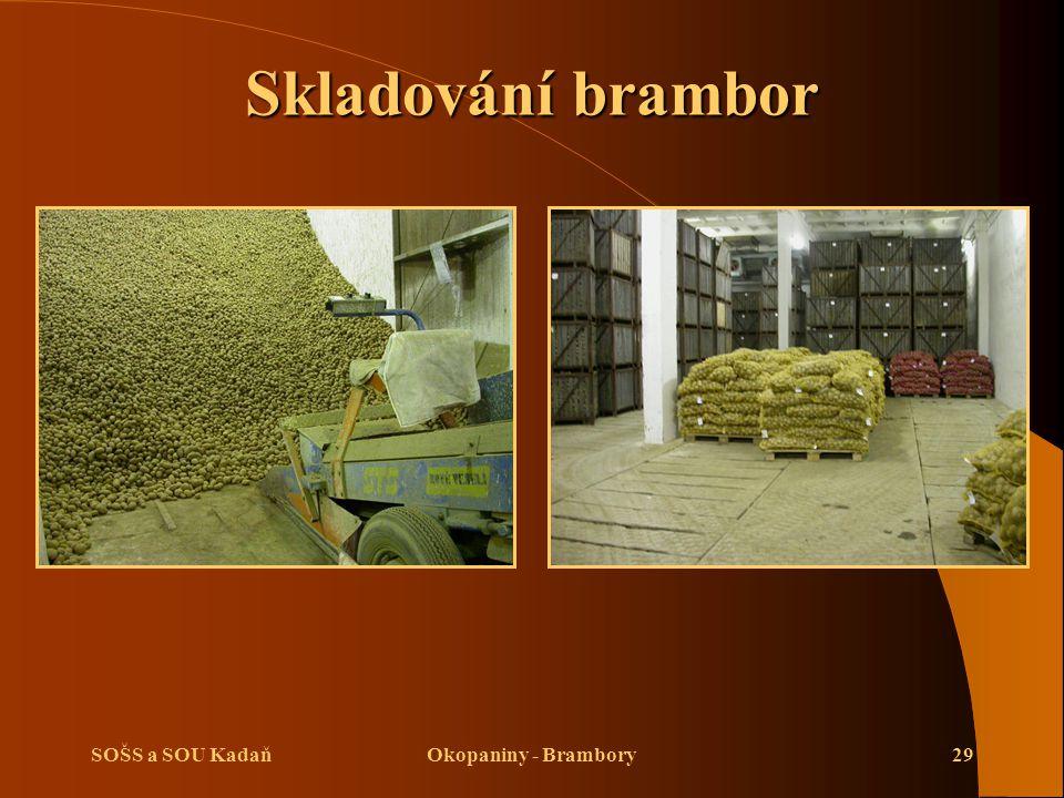 Skladování brambor SOŠS a SOU Kadaň Okopaniny - Brambory