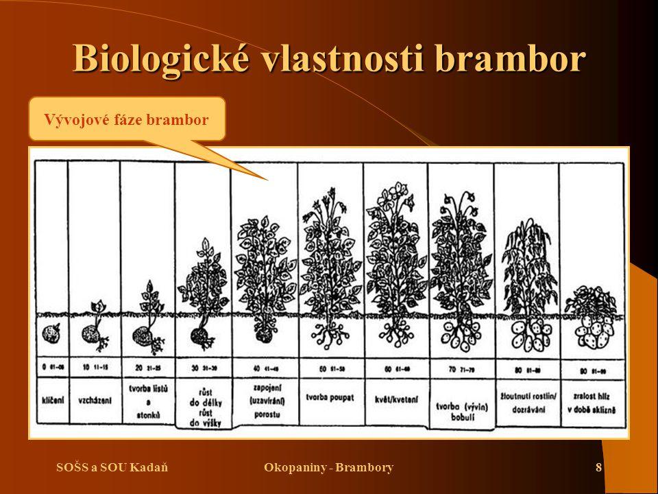 Biologické vlastnosti brambor