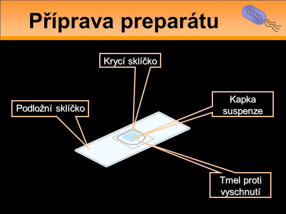 Příprava preparátu Krycí sklíčko Kapka suspenze Podložní sklíčko