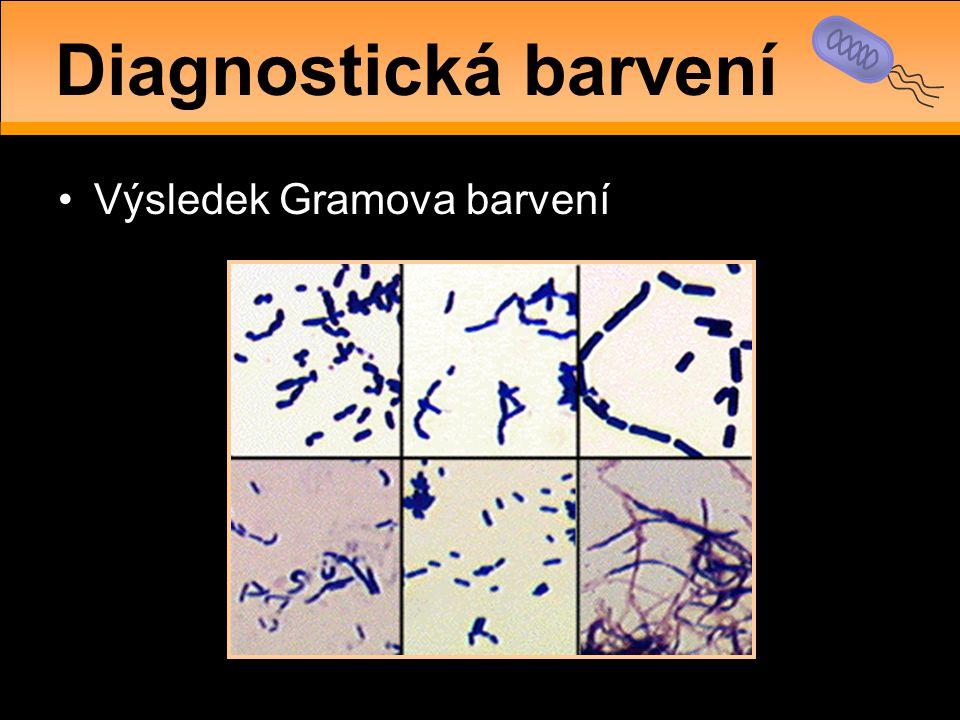 Diagnostická barvení Výsledek Gramova barvení