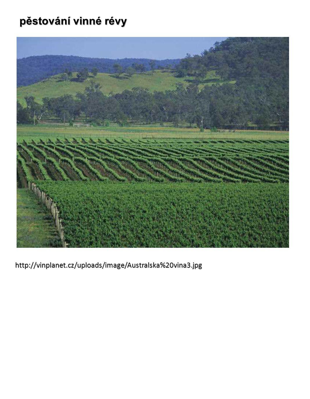 pěstování vinné révy http://vinplanet.cz/uploads/image/Australska%20vina3.jpg