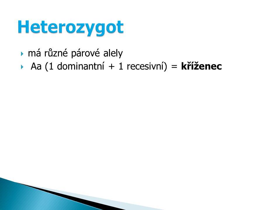Heterozygot má různé párové alely