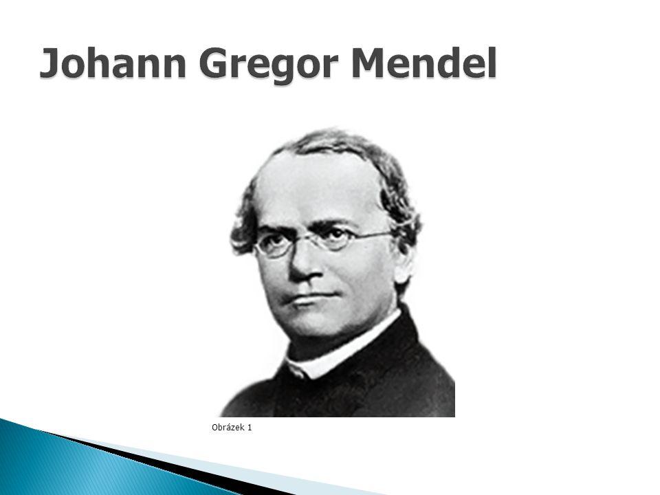 Johann Gregor Mendel Obrázek 1