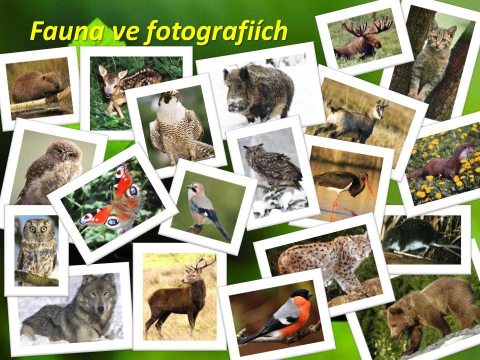 Fauna ve fotografiích