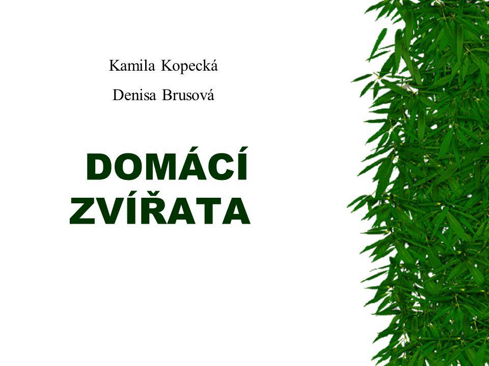 Kamila Kopecká Denisa Brusová DOMÁCÍ ZVÍŘATA
