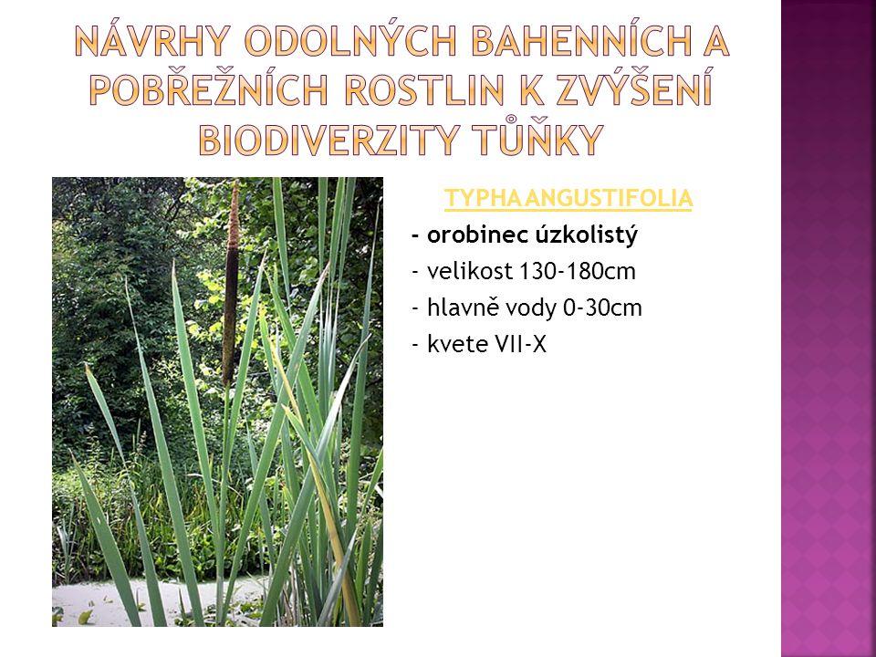Návrhy odolných bahenních a pobřežních rostlin k zvýšení biodiverzity tůňky