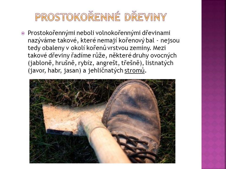 Prostokořenné dřeviny