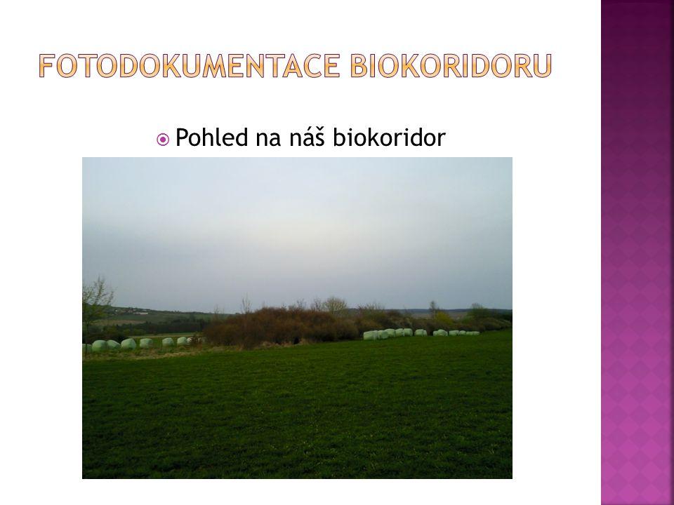 Fotodokumentace biokoridoru