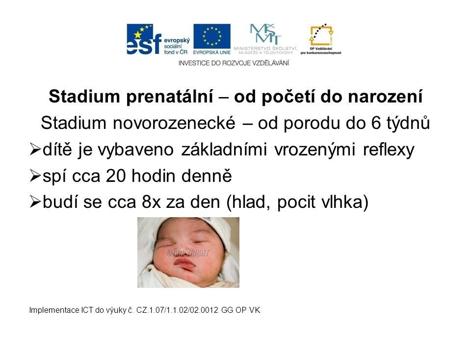 Stadium prenatální – od početí do narození