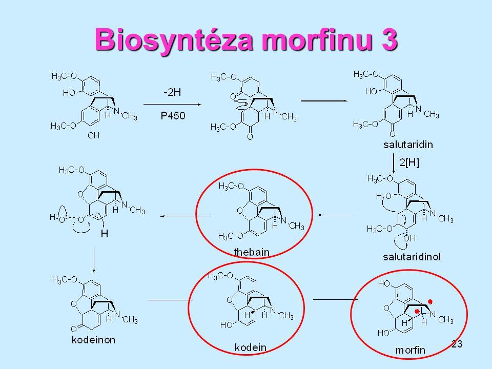 Biosyntéza morfinu 3