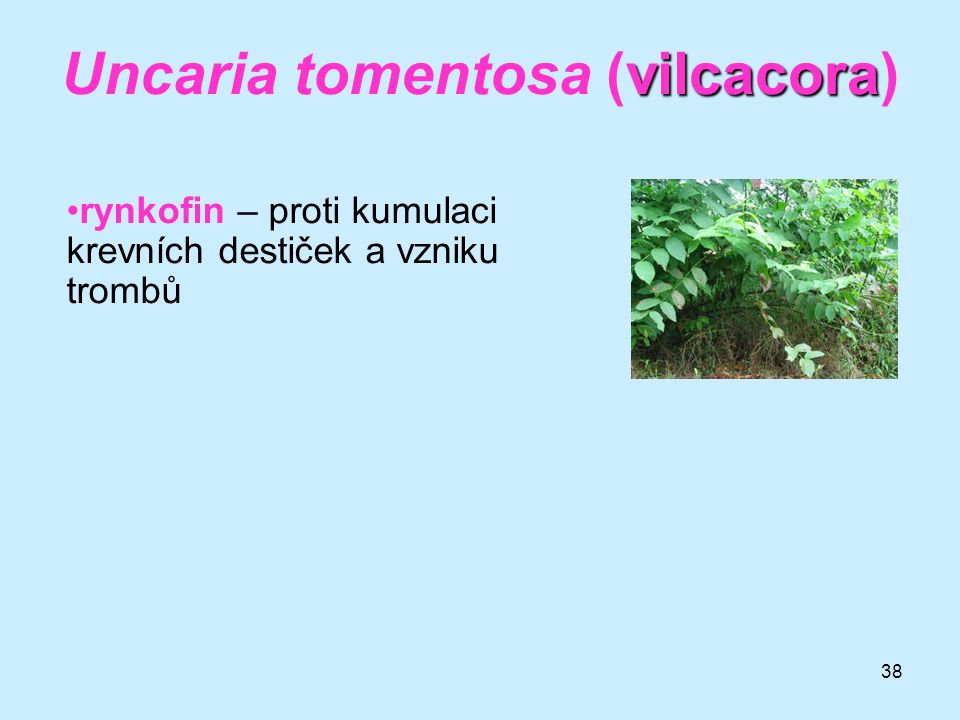 Uncaria tomentosa (vilcacora)