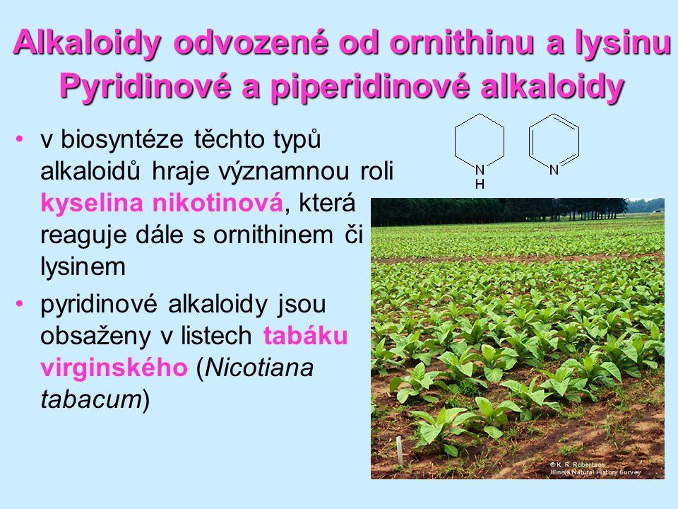 Alkaloidy odvozené od ornithinu a lysinu Pyridinové a piperidinové alkaloidy