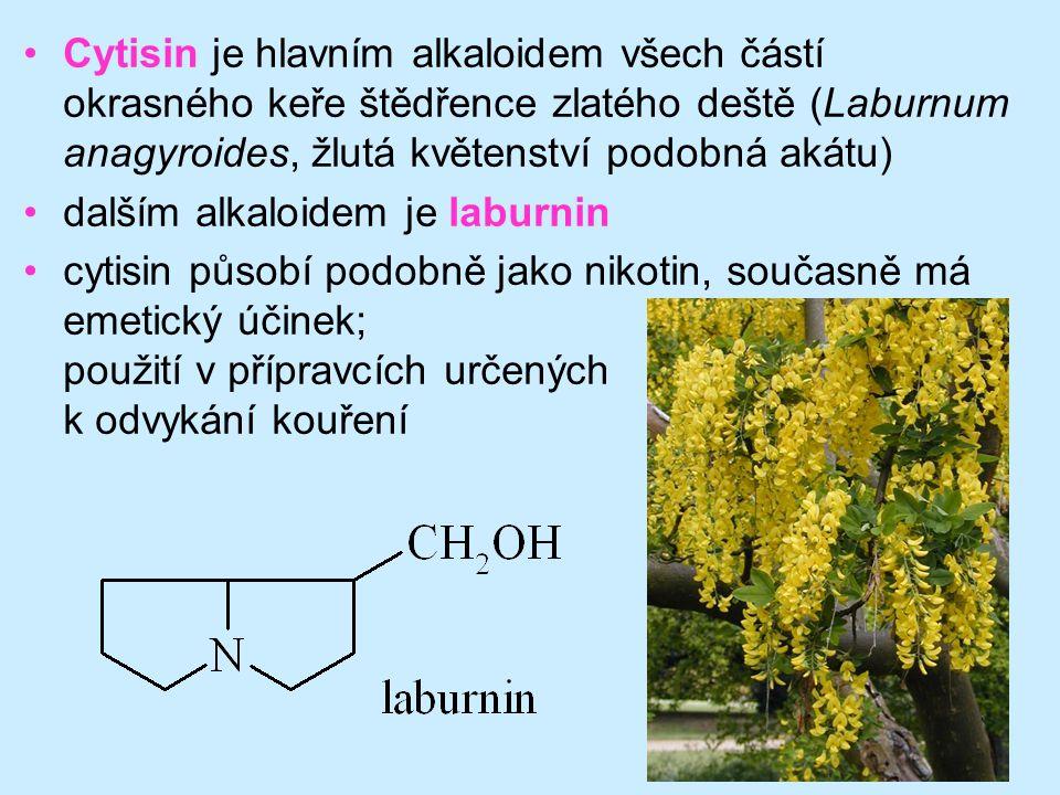 Cytisin je hlavním alkaloidem všech částí okrasného keře štědřence zlatého deště (Laburnum anagyroides, žlutá květenství podobná akátu)