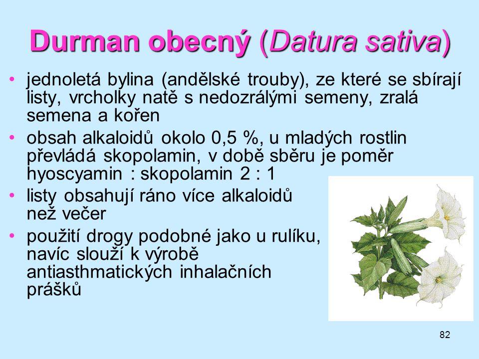 Durman obecný (Datura sativa)