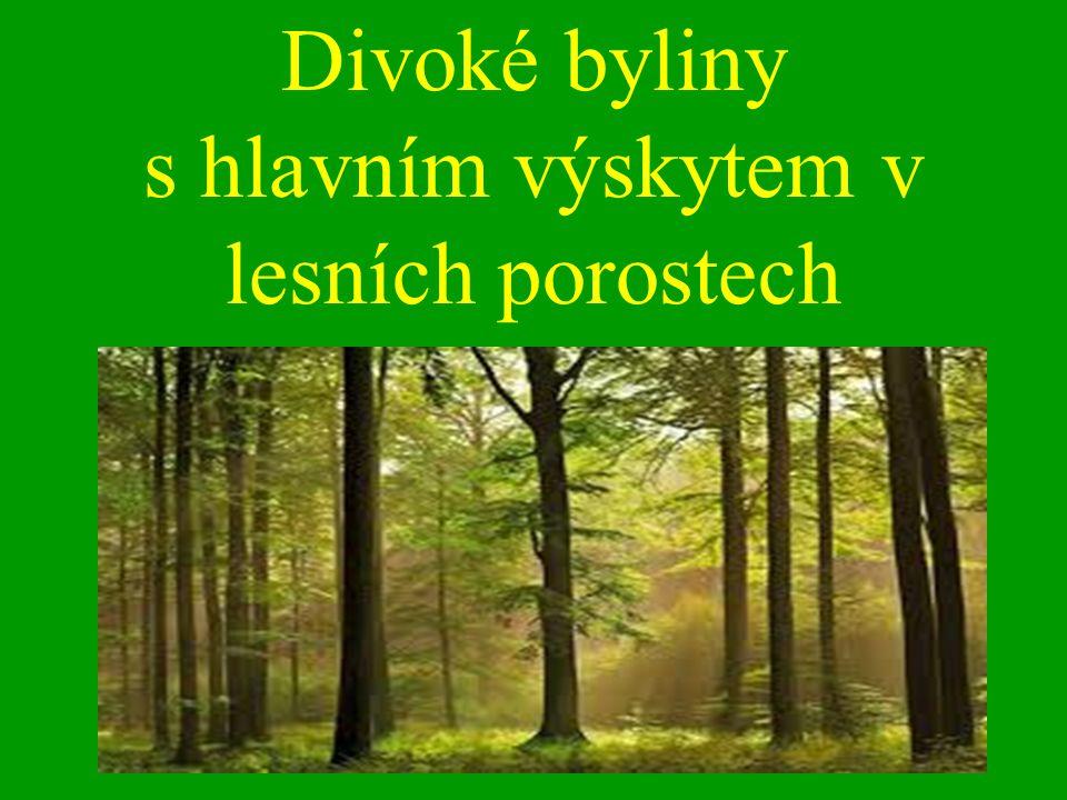 Divoké byliny s hlavním výskytem v lesních porostech