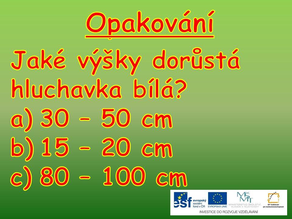 Opakování Jaké výšky dorůstá hluchavka bílá 30 – 50 cm 15 – 20 cm